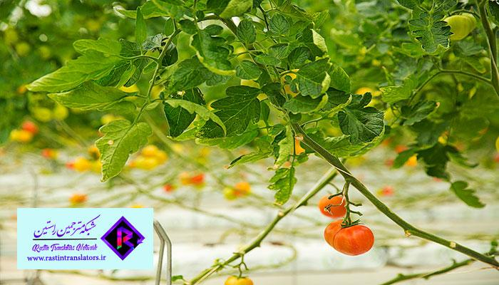 ترجمه تخصصی کشاورزی   ترجمه مقاله کشاورزی